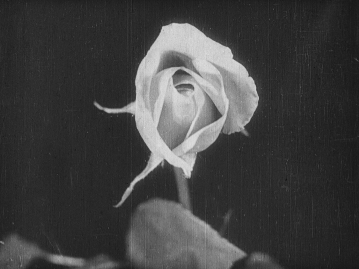 The Birth of a Flower, 1910, Percy Smith (Foto: British Film Institute)